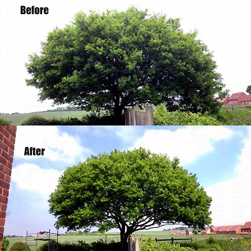tree pruning Ellesmere Port