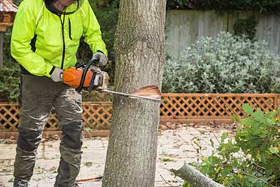 Tree Surgeons in Wirral