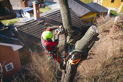 Tree Surgeon Wirral